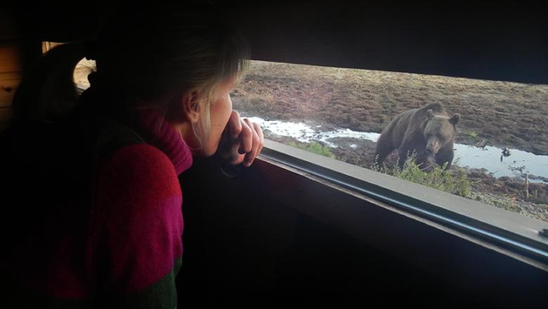 Tarkkailukojun sisältä otettu kuva, jossa näkyy nainen katsomassa ikkunasta lähelle tullutta karhua.