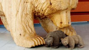 En stor björnskulptur av trä, som föreställer en björn som böjer sig fram över två små björnar i trä framför den.
