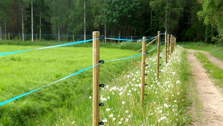 Heinäpelto, jonka ympärillä on korkea, puutolpista, sähkölinjoista ja nauhoista rakennettu aita. Oikealla puolen on ruohoa kasvava hiekkatie.