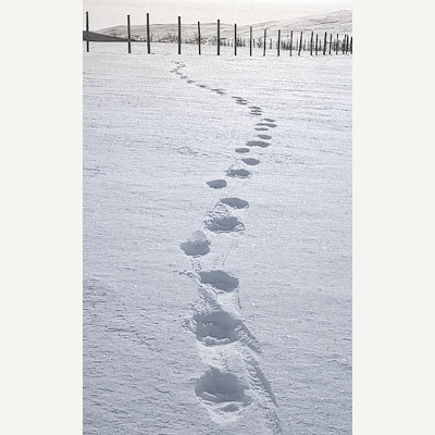 Ahman tyypillistä kolmijälkeä lumen pinnalla. Kolme loivan kaarikuvion muodostavaa jälkeä peräkkäin, toistuu aina uudelleen.
