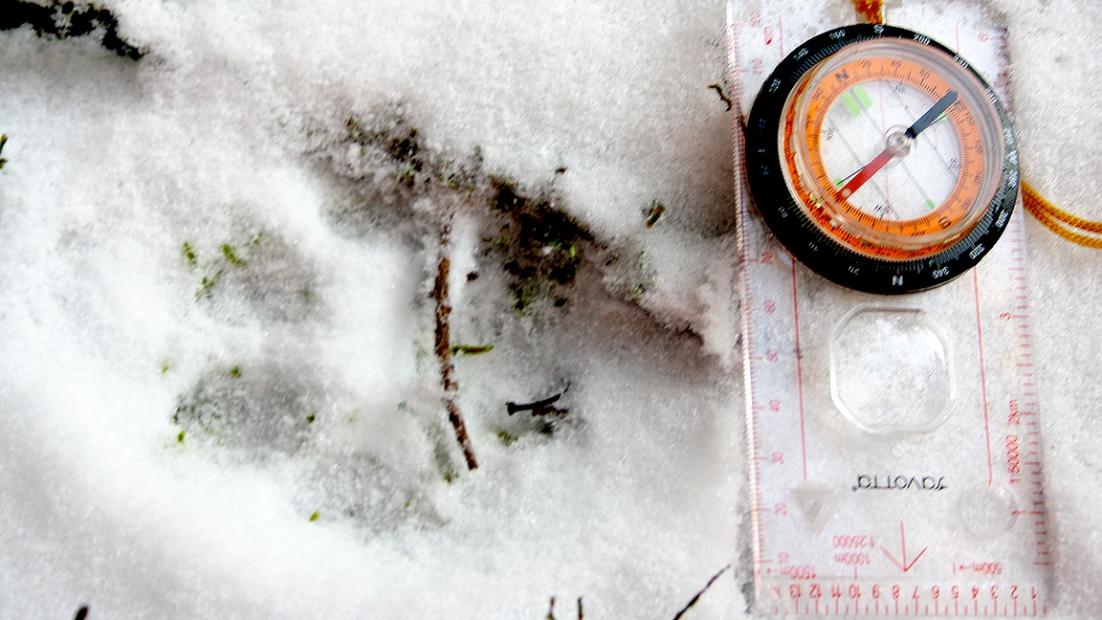 Ilveksen nelivarpainen jalanjälki lumessa. Vieressä kompassi.