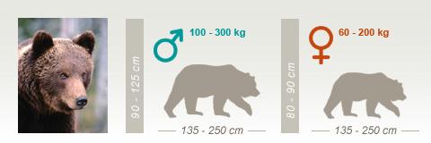 Karhun Jäljet