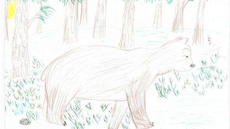 Lapsen piirros oikealle kävelevästä karhusta. Taustalla metsää.