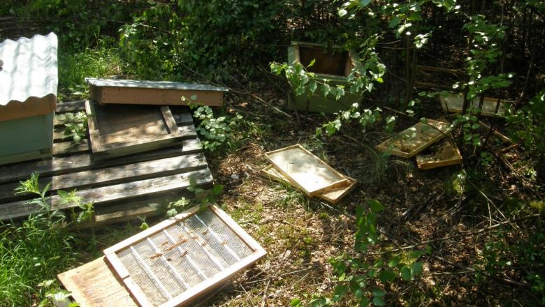 Karhu on rikkonut mehiläispesän. Kuvassa rakennetun pesän osia hajallaan maassa.